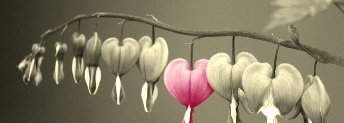 bleeding-heart-600410_1920