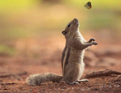 O žiru i veverici